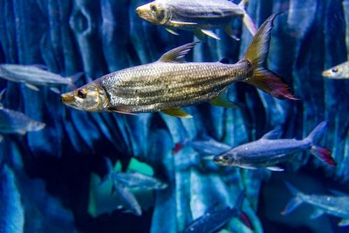 Poema del Mar akvarium i Las Palmas, kul för både stor och liten.