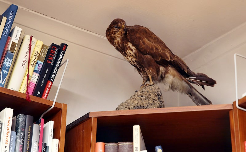 På en av bokhyllorna i biblioteket står den uppstoppade rovfågeln och övervakar rummet.