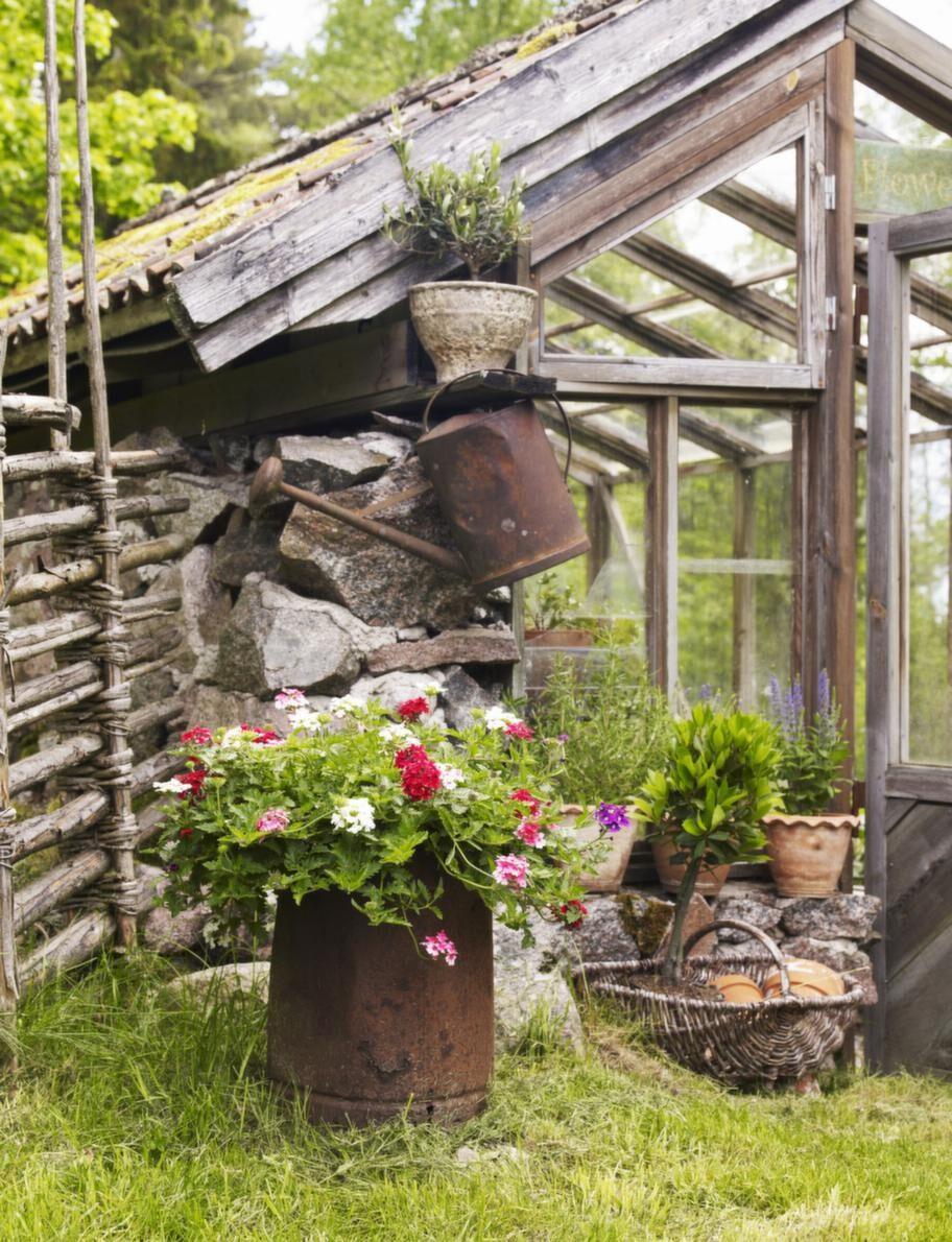 Växthus. Det gamla växthuset ena vägg är uppmurad av sten, vilket bidrar till ett bra växthusklimat.
