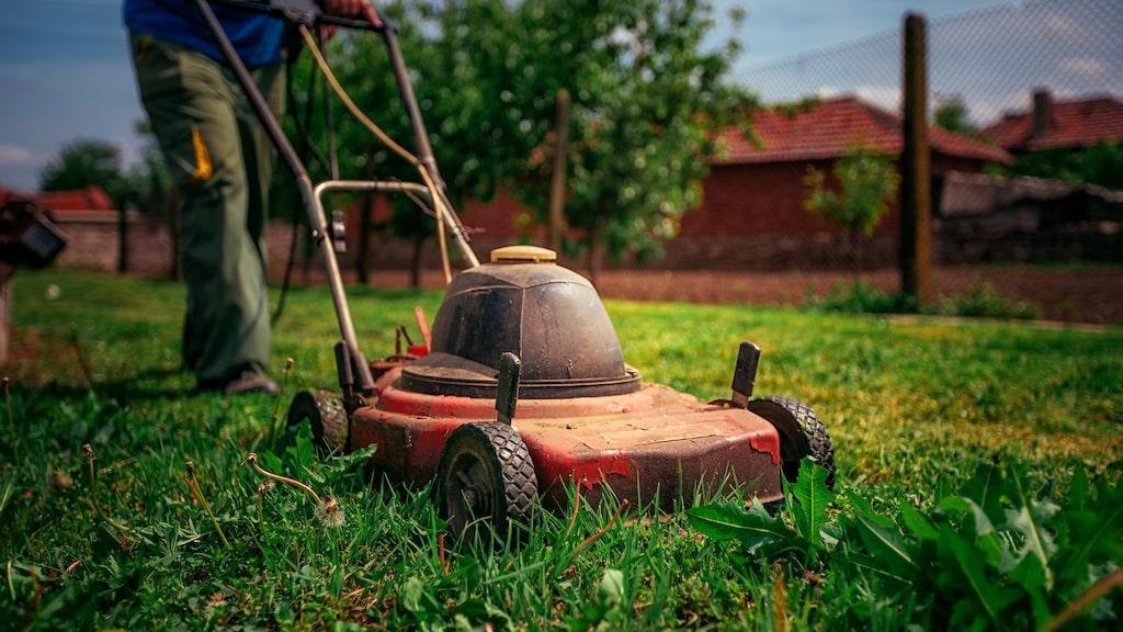 Ta aldrig bort mossan, gödsla kontinuerligt under hela säsongen och klipp gräsmattan två gånger i veckan, är några av trädgårdsmästaren Anna Theorins proffs-tips. Läs mer nedan!