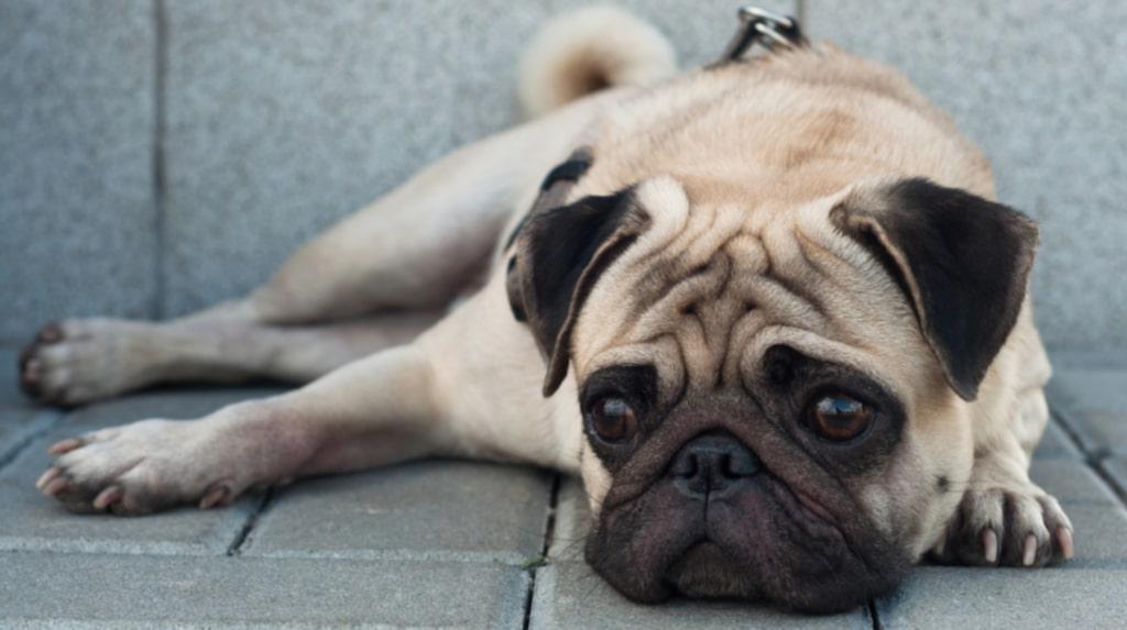 <p>Alla hundar uppskattar inte att byta sina rutiner mot livet på resande fot.</p>