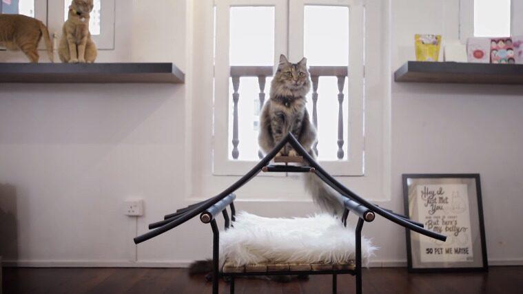 Lite Asien-inspirerad kattbädd. Ser både snygg och skön ut. Rolig att klättra på också.