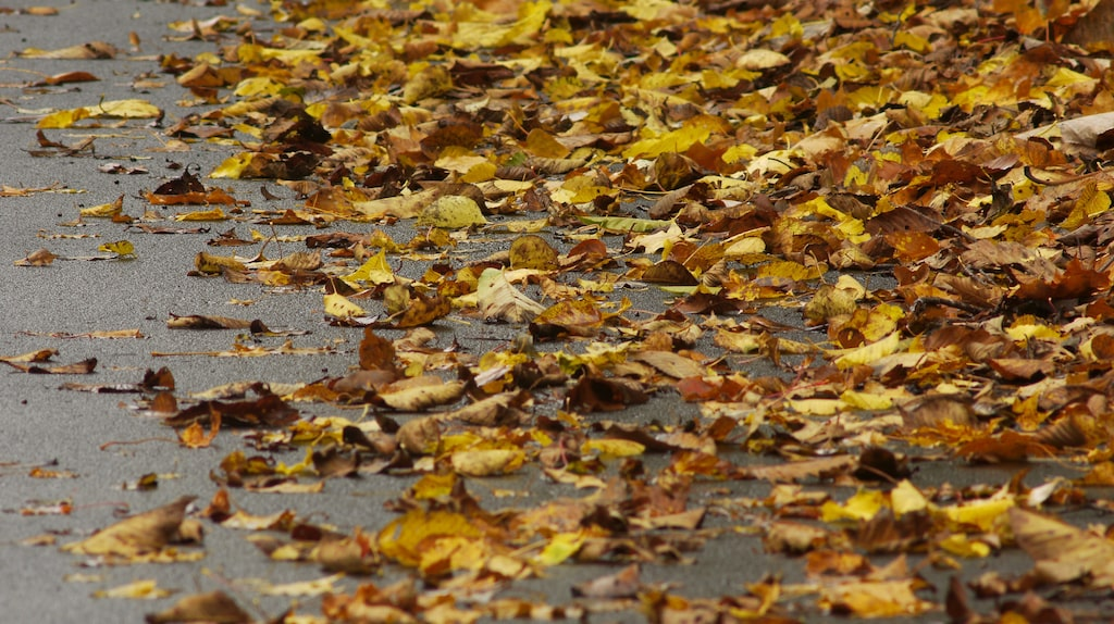 Löv är jättebra! Ligger de på rabatterna eller under häcken ska du låta dem ligga kvar. Vad löven gör är att jordförbättra, de ökar mullhalten i jorden.