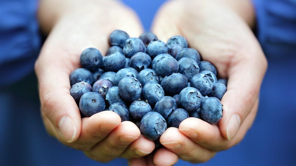 Det finns inte mycket som slår egenplockade blåbär. Först en rogivande stund, alternativt trevlig familjeaktivitet, i skogen, sedan njutningen av de nyttiga och goda bären. Att sylta, baka med eller frysa in och äta under resten av året.