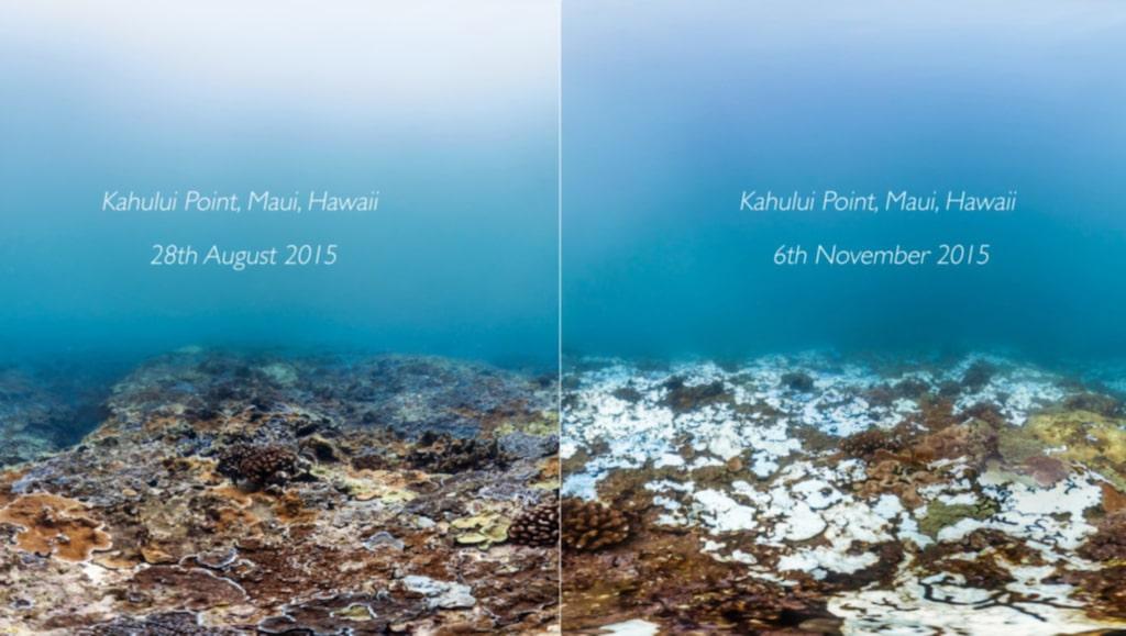 <p>Även Hawaii är påverkat.</p> <p>FOTO: XL Catlin Seaview Survey</p>