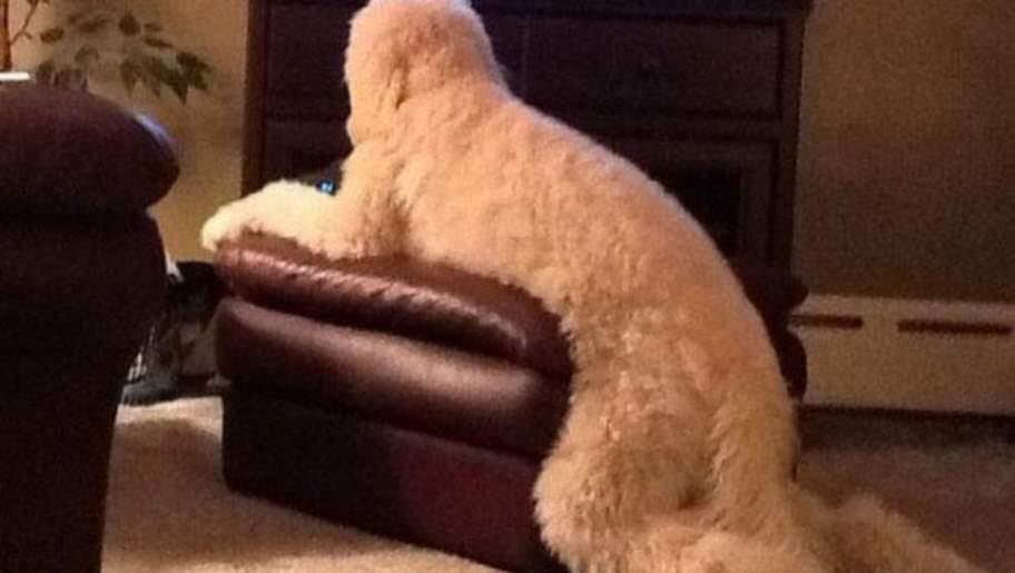 Är det en hund? Är det en Yeti?