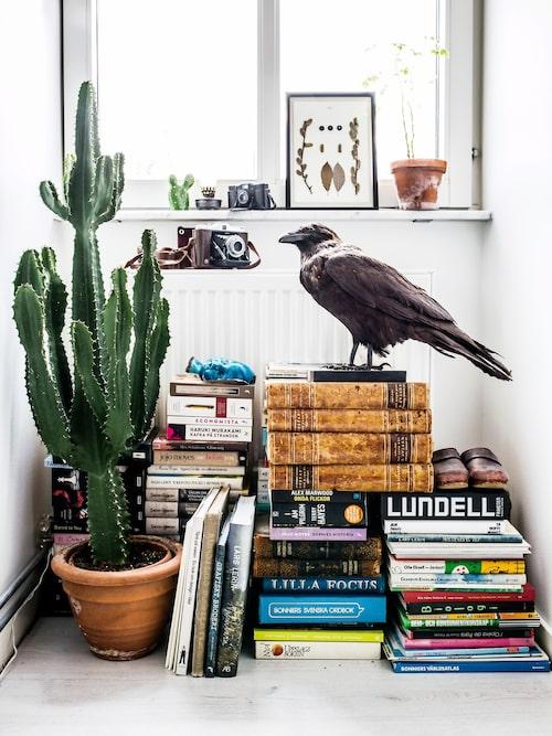 Anna älskar att bygga stilleben och förändrar dem hela tiden. Framför ett fönster samsas böcker med gåvor från vänner och personliga minnessaker. Det blå, halva keramikhuvudet är egentligen en Rakudoll från keramikern Lisa Hammar Posse, men efter att den tappades i golvet och gick sönder har den fått nytt liv som vacker prydnad på detta sätt.
