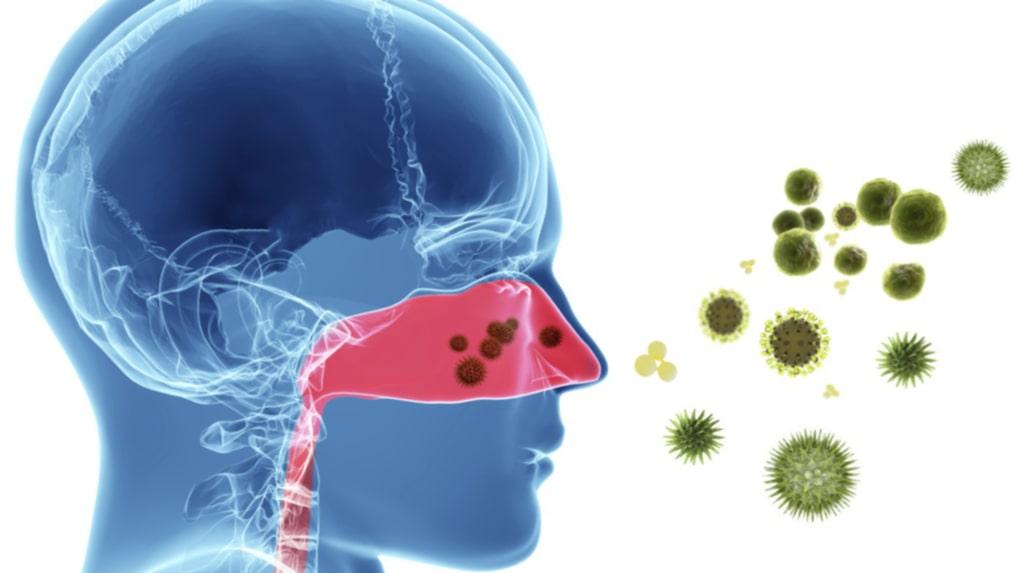 <p>Snoret fungerar nämligen som kroppens reningsverk och skyddar oss från yttre hot!<br></p>