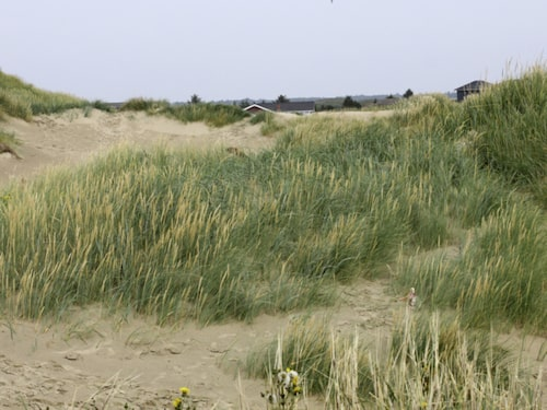 Sanddynerna är en perfekt plats för en picknick.