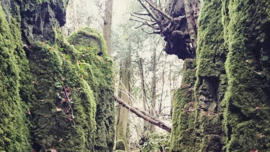 <p>Skogen Puzzelwood hyser några av filmseriens figurer.</p>