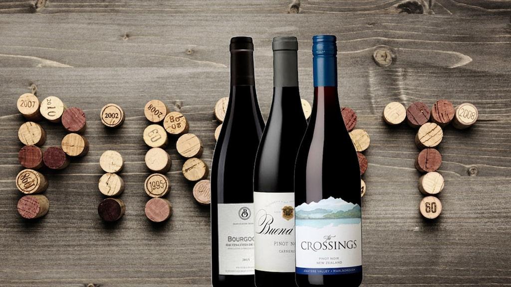 Pinot noir är en populär druva världen över.