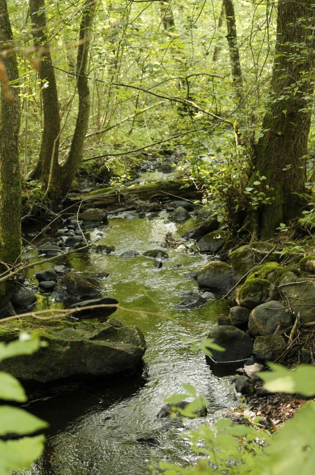 Härlig vandring i Axelstorps skogar.