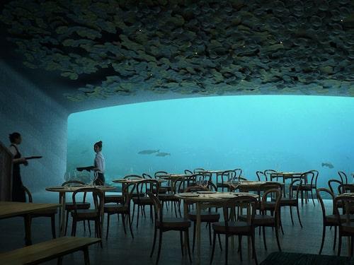 Restaurangdelen ligger på fem meters djup.