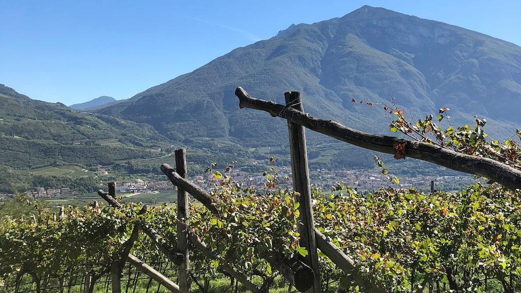 I Trentodoc vid foten av de italienska Alperna görs förstklassigt mousserande vin.