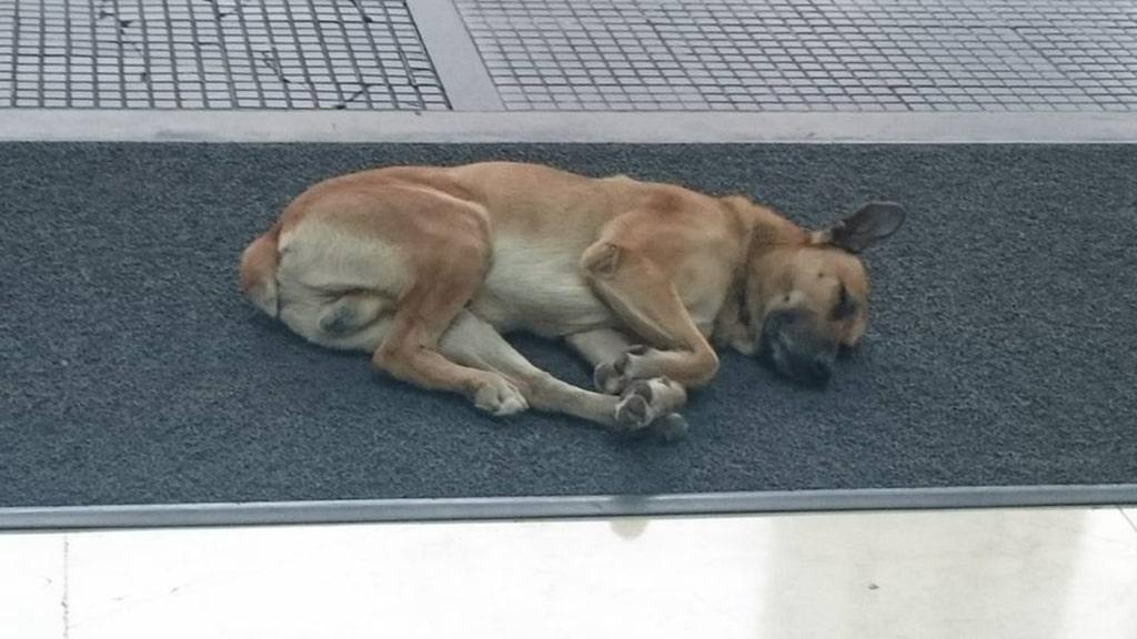 Under det följande dryga halvåret väntade den hemlösa hunden utanför hotellet varje gång Olivia återvände.