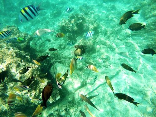 Rikt undervattensliv utanför Giliöarna.