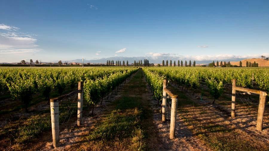 Hawkés Bay på den norra öns östra kust är Nya Zeelands äldsta vinregion. Här görs i dag några av världens främsta syrahviner.
