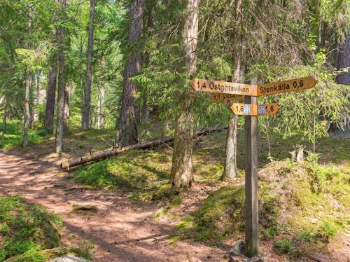 Man nästan anar att skogsrår, sjöjungfrur och vättar döljer sig bakom stenarna i nationalparken i Tiveden.