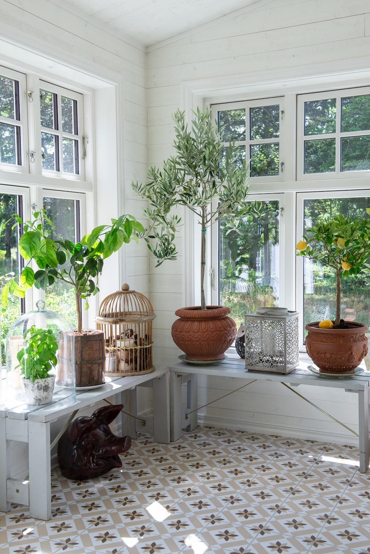 Medelhavsväxterna trivs i det ljusa matrummet. Stor ljuslykta, från Mathilde.