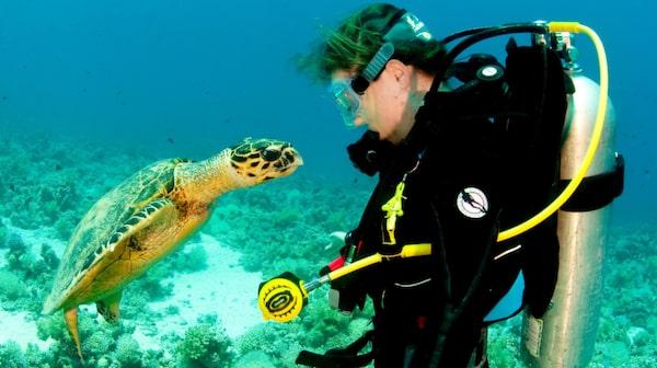 Maldiverna är ett populärt dykresmål.