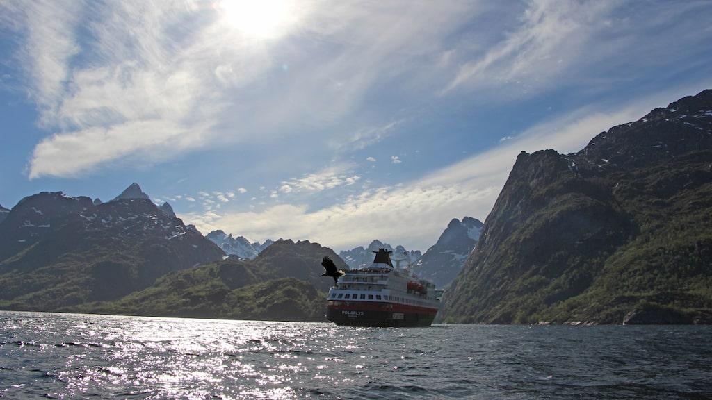 Havsörnen dyker ner mellan ribbåten och fartyget.
