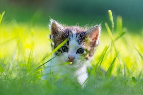 Ny kattunge? Då kan du få ledigt.