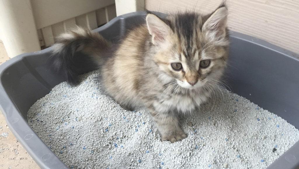 Tycker du också att din kattlåda luktar och mest är i vägen?