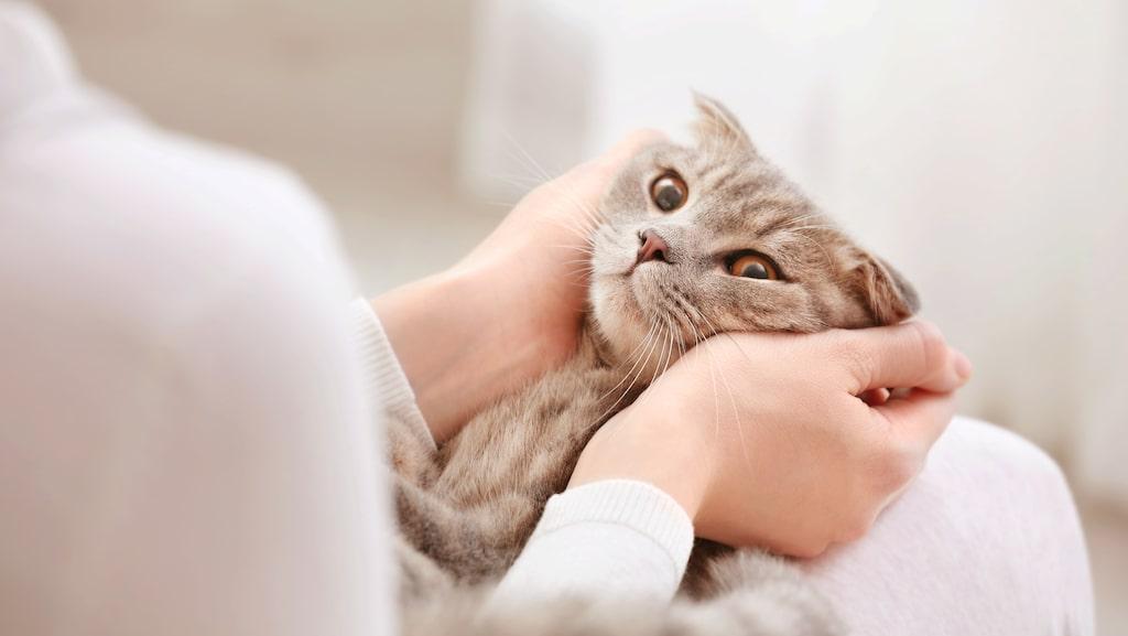 Den nya studien visar att ägare till sjuka djur drabbades av mer stress, depression och ångest i jämförelse med de som hade friska husdjur.