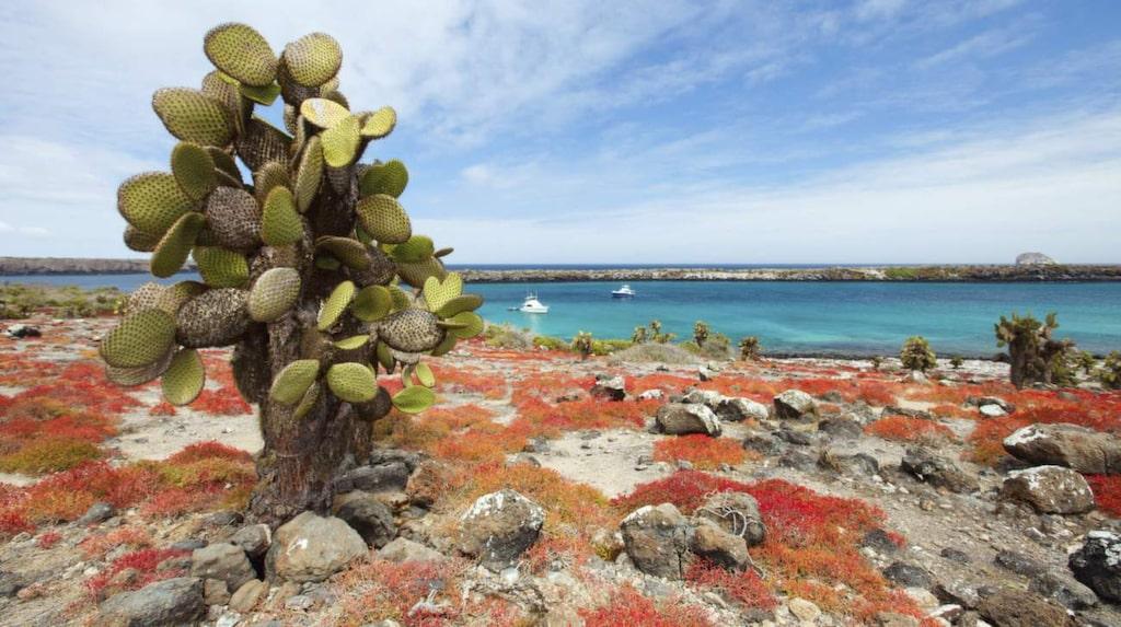 De karga öarna är som Edens lustgård bevarad.