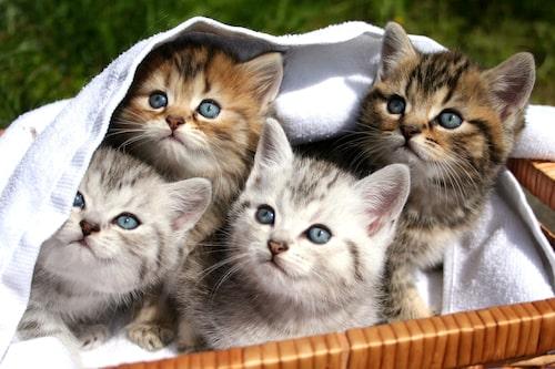 Kolla in kattungen i dess hem innan du bestämmer dig.