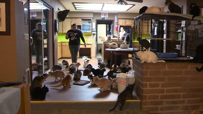 Matdags! Då flockas de 1000 katterna.