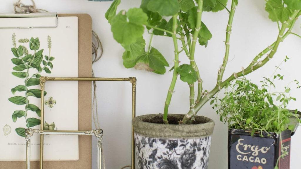 Gamla tallrikar är söta med olika motiv och färger, häng upp några udda tallrikar, i stället för tavlor, på väggen.