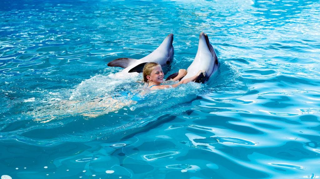 Stopp för att simma med delfiner i Nya Zeeland.