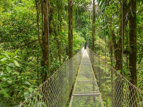 I Monteverdes molnskog vandrar man på hängande broar i regnskogen.