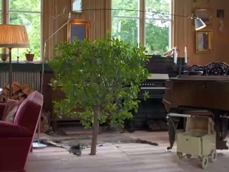 Det är ett äkta citrusträd som växer genom golvet i kapellet.
