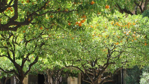 En underbar och välbehövlig oas i den annars så stimmiga och tuffa stadsdelen Raval.