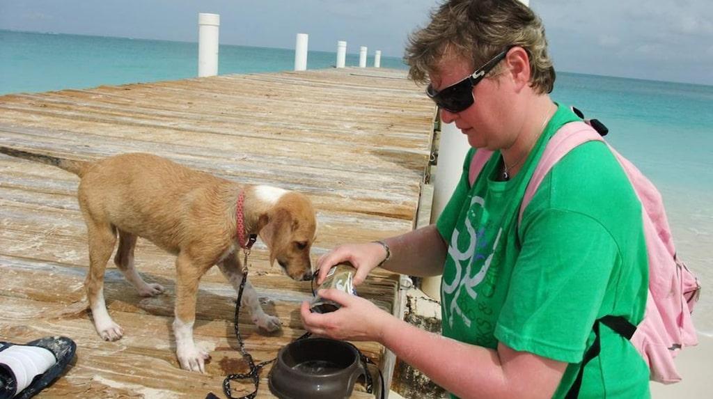 Välgörenhetsorganisationen Potcake Place arbetar för att finna nya hem åt hundarna och med att fostra och träna dem så att de kan bli adopterade.