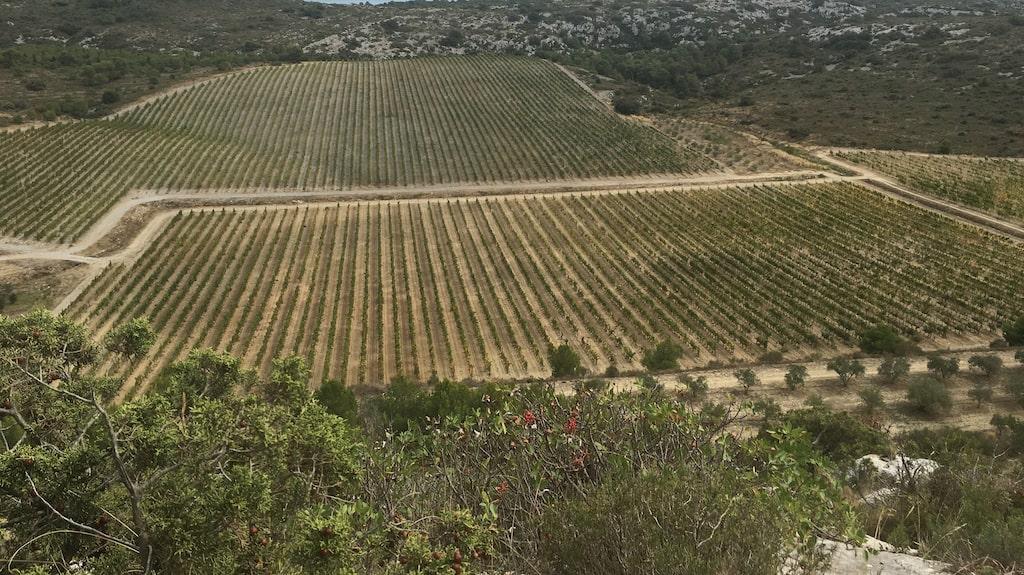 Anläggningen nära Narbonne i Langudeoc-Rousslon bjuder på en magnifik utsikt över vingårdar och medelhavet.