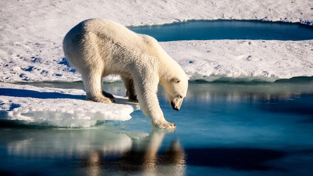 Grönland är världens största ö och hör politiskt sett till Danmark och geografiskt sett Nordamerika.
