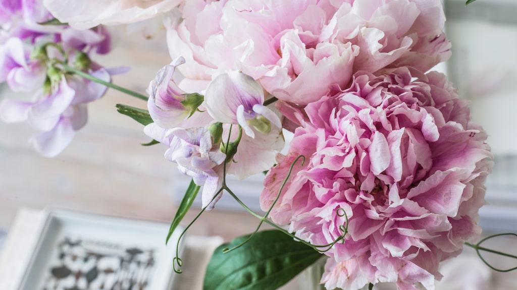 Läs experternas tips och råd nedan samt vilka blommor som ska införskaffas redan nu.