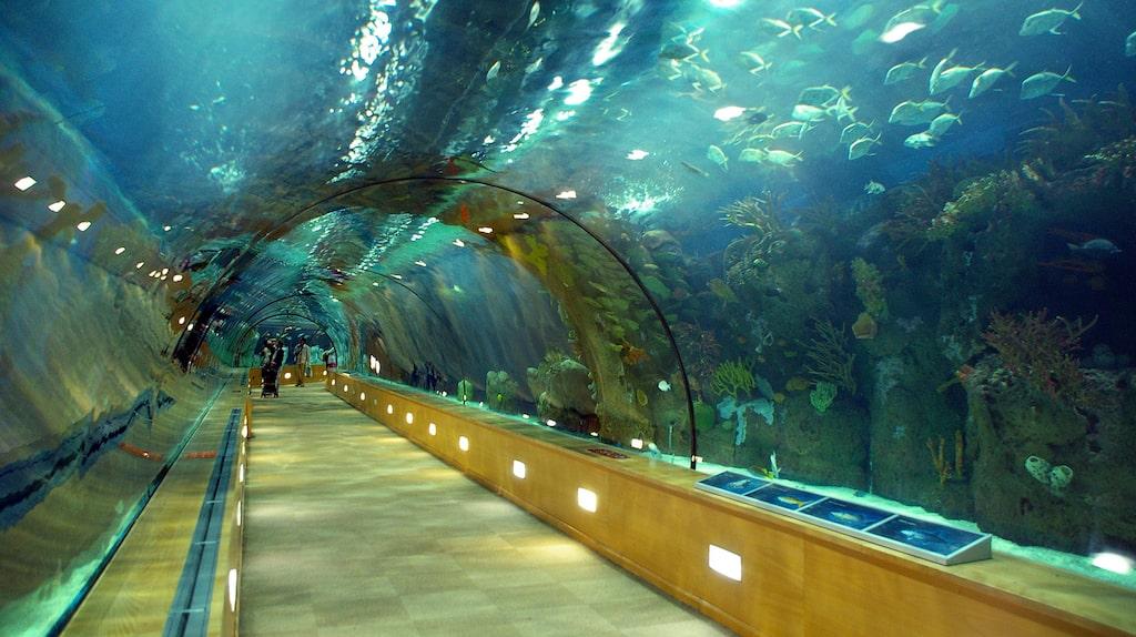 Europas största akvarium Oceanogràfic tog tolv år att bygga.