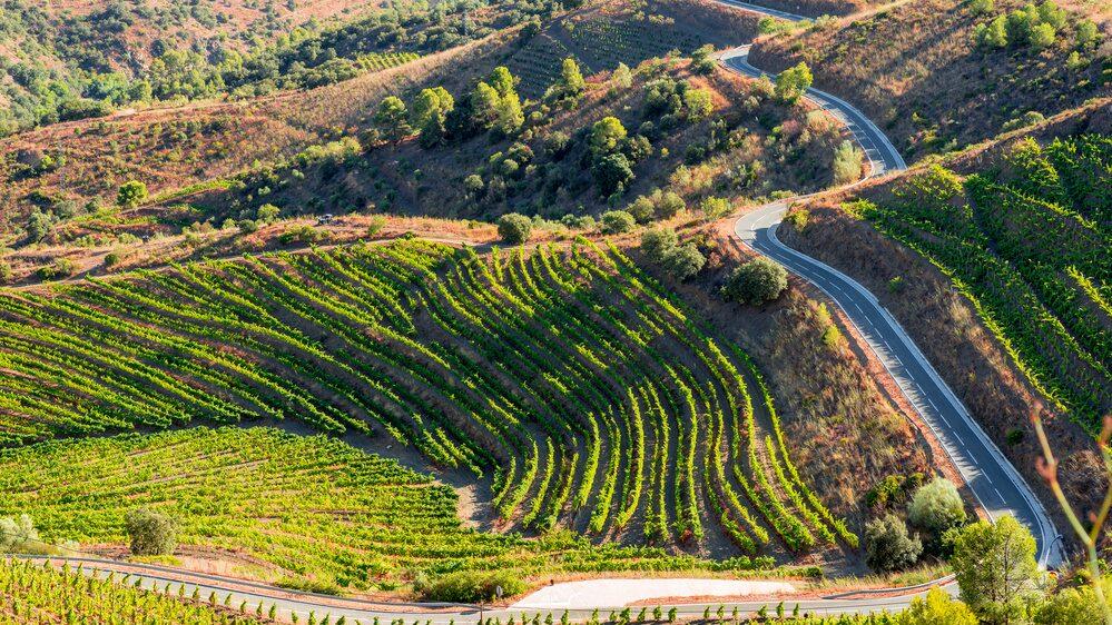 Garnacha/Grenache är en lättodlad druva som sägs ha sitt ursprung i Spanien. I dag odlas den världen runt, från Sydafrika till Australien och USA.