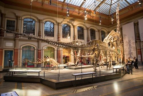 Sevärda dinosaurieskelett på Museum fur Naturkunde – naturhistoriska museet.