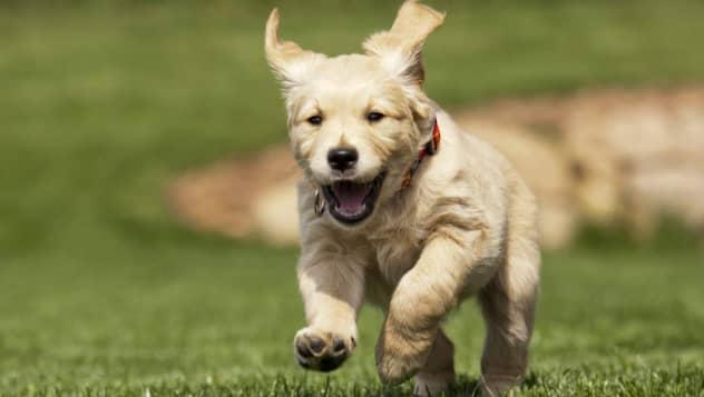 Bildresultat för sällskapsdjur