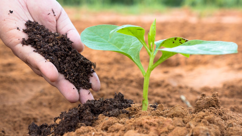 För att grödor ska växa behöver jorden vara näringsrik.