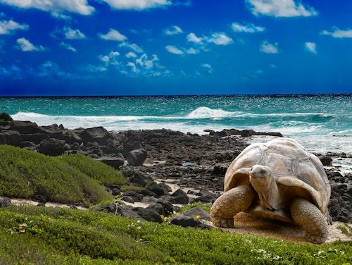 Galapagosöarna är världsberömda för sitt otroliga djurliv, däribland sköldpaddor.