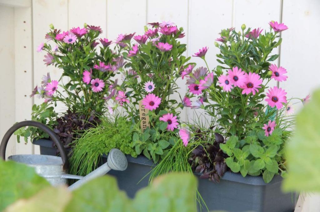 Trendig blandning! På trädgårdsmässan kunde man hos Blomlabbet lära sig odla grönsaker, örter, bär, ätbara blommor och frukter i kruka. Att blanda blommor och ätbart är det senaste.