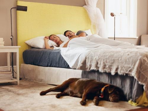"""""""Rätta"""" sättet att sova med hund i sovrummet, enligt forskarna."""