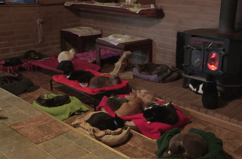 Här ligger några av alla katter och sover gott framför den varma kaminen.