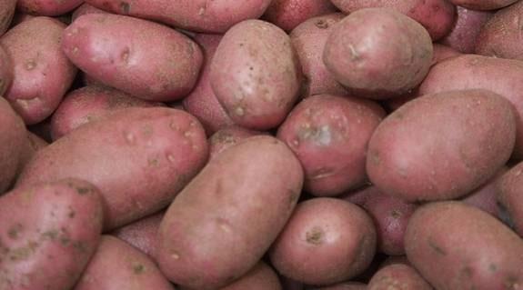 Potatislandet Sverige sparkade bakut när Calle Carlsson kom med sina testresultat och rådde alla att utesluta potatis ur kosten.